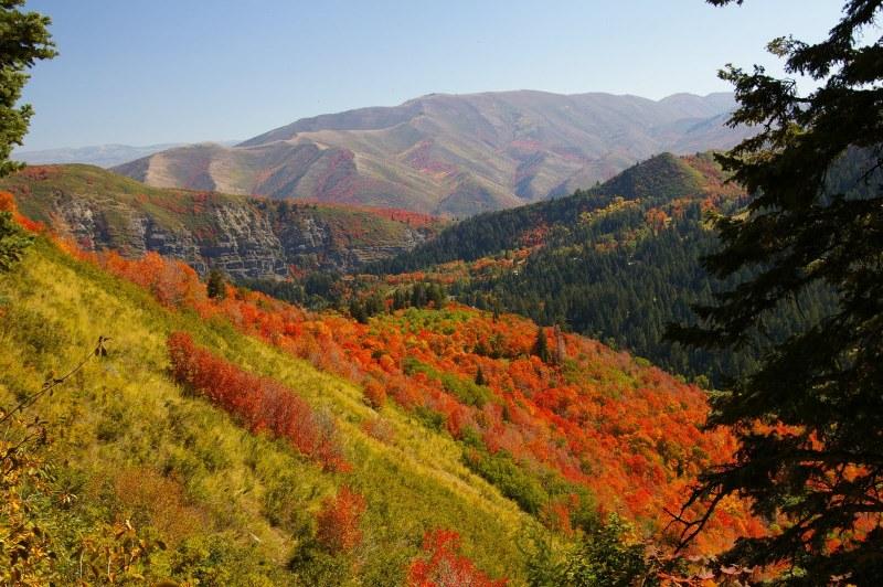 Big-Bear-fall-colors